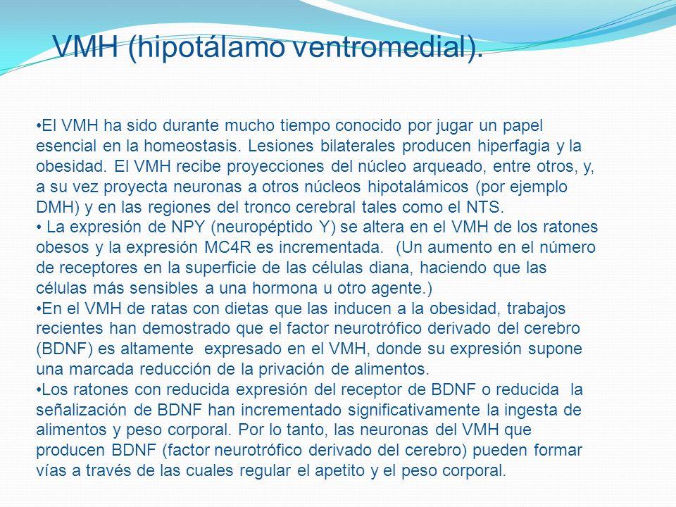 El VMH ha sido durante mucho tiempo conocido por jugar un papel esencial en la homeostasis. Lesiones bilaterales producen hiperfagia y la obesidad. El