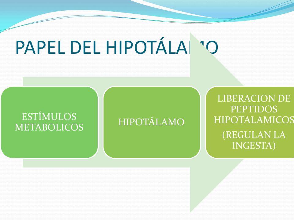 PAPEL DEL HIPOTÁLAMO ESTÍMULOS METABOLICOS HIPOTÁLAMO LIBERACION DE PEPTIDOS HIPOTALAMICOS (REGULAN LA INGESTA)