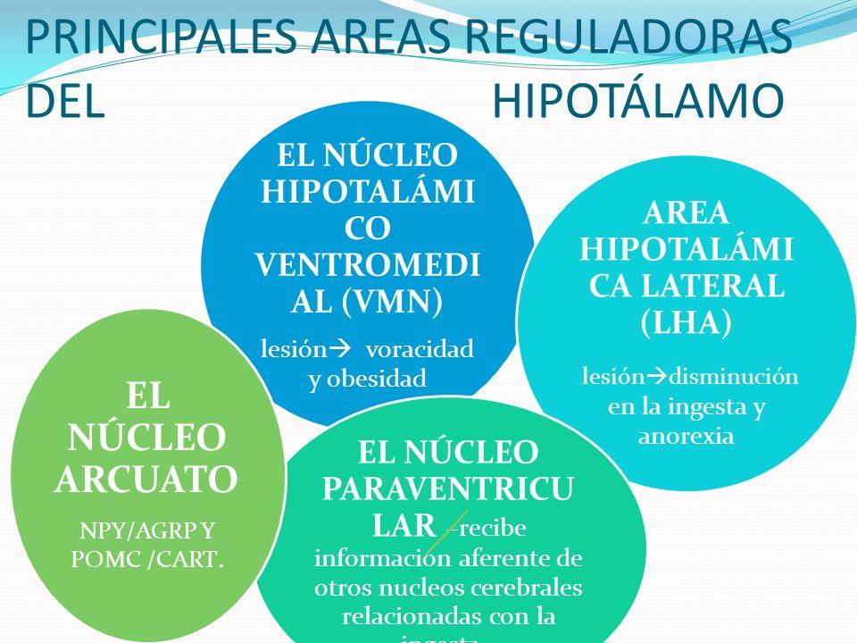 PRINCIPALES AREAS REGULADORAS DEL HIPOTÁLAMO EL NÚCLEO HIPOTALÁMI CO VENTROMEDI AL (VMN) lesión voracidad y obesidad AREA HIPOTALÁMI CA LATERAL (LHA)