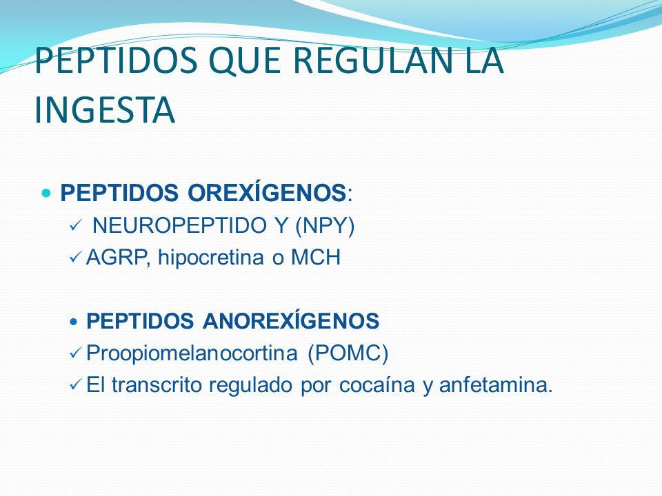 PEPTIDOS QUE REGULAN LA INGESTA PEPTIDOS OREXÍGENOS: NEUROPEPTIDO Y (NPY) AGRP, hipocretina o MCH PEPTIDOS ANOREXÍGENOS Proopiomelanocortina (POMC) El