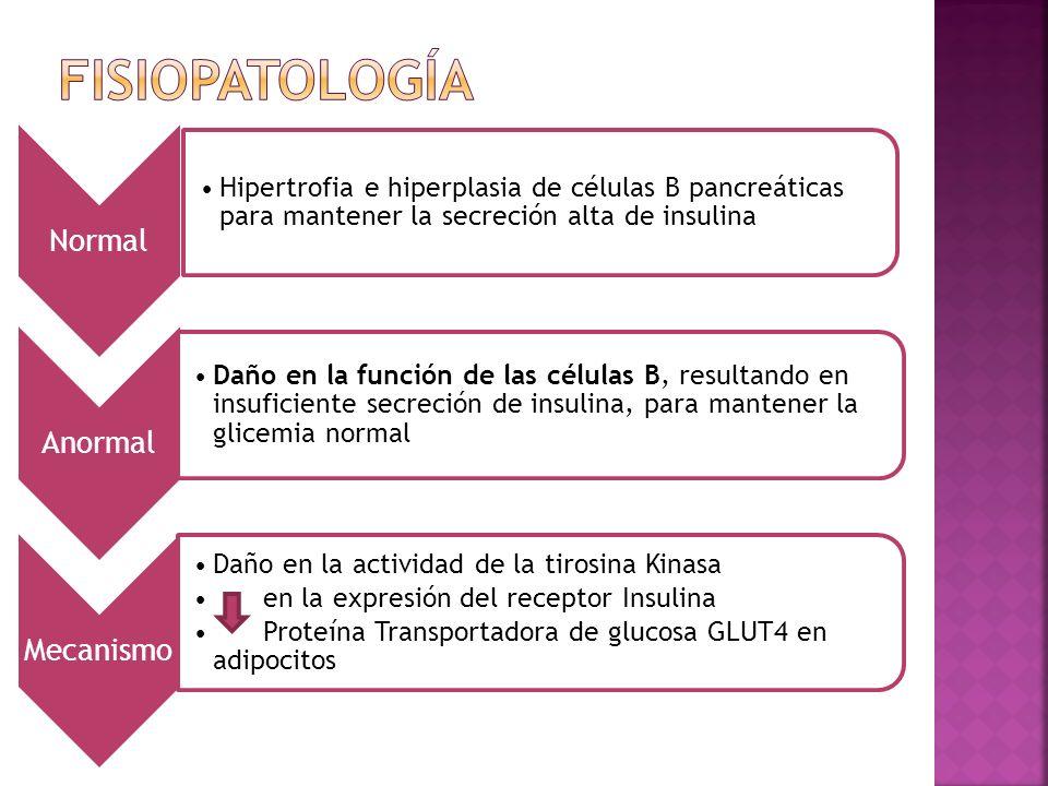 Normal Hipertrofia e hiperplasia de células B pancreáticas para mantener la secreción alta de insulina Anormal Daño en la función de las células B, resultando en insuficiente secreción de insulina, para mantener la glicemia normal Mecanismo Daño en la actividad de la tirosina Kinasa en la expresión del receptor Insulina Proteína Transportadora de glucosa GLUT4 en adipocitos