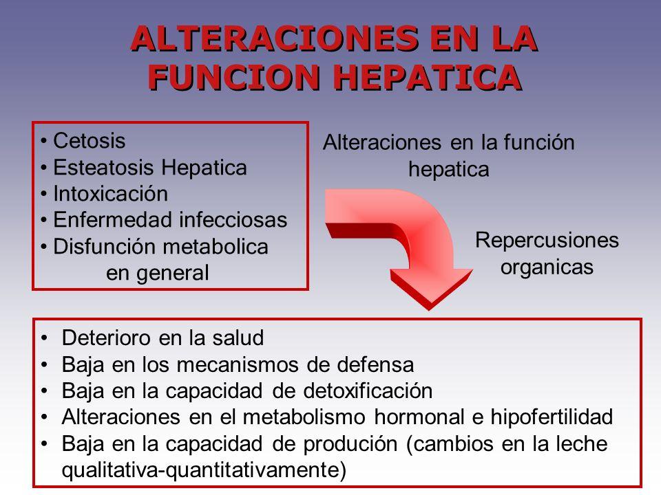 Cetosis Esteatosis Hepatica Intoxicación Enfermedad infecciosas Disfunción metabolica en general Alteraciones en la función hepatica Repercusiones org