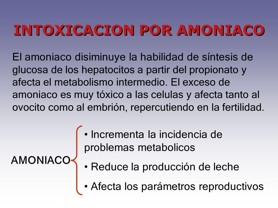 INTOXICACION POR AMONIACO El amoniaco disiminuye la habilidad de síntesis de glucosa de los hepatocitos a partir del propionato y afecta el metabolismo intermedio.