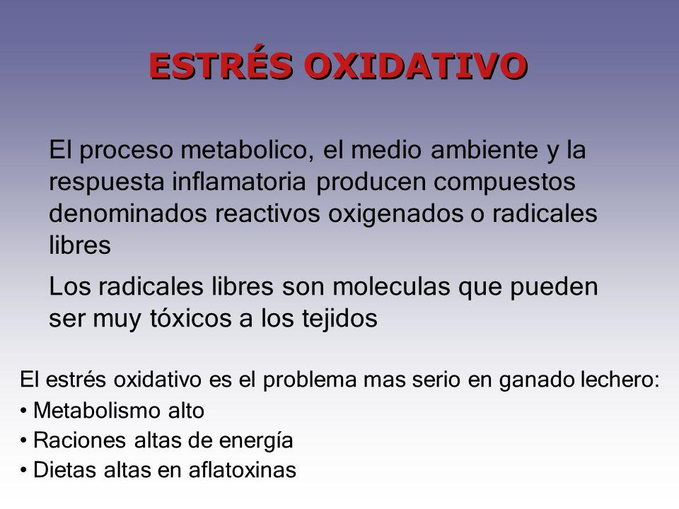 ESTRÉS OXIDATIVO Los radicales libres son moleculas que pueden ser muy tóxicos a los tejidos El estrés oxidativo es el problema mas serio en ganado le