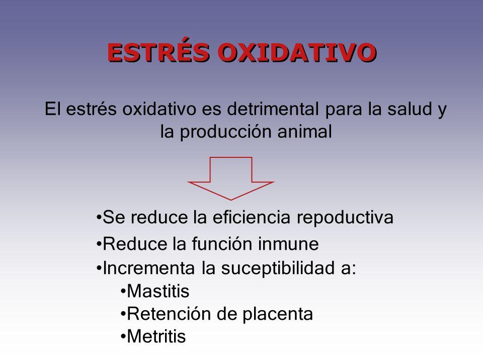ESTRÉS OXIDATIVO El estrés oxidativo es detrimental para la salud y la producción animal Se reduce la eficiencia repoductiva Reduce la función inmune Incrementa la suceptibilidad a: Mastitis Retención de placenta Metritis