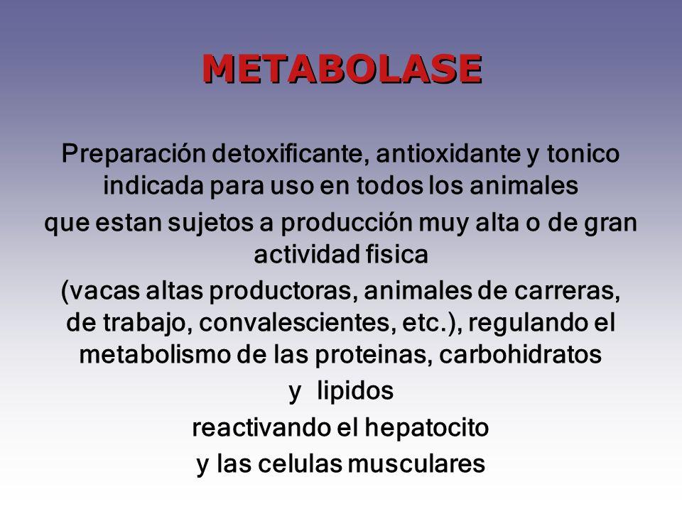 Preparación detoxificante, antioxidante y tonico indicada para uso en todos los animales que estan sujetos a producción muy alta o de gran actividad f