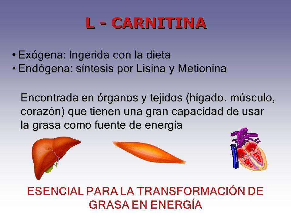 Exógena: Ingerida con la dieta Endógena: síntesis por Lisina y Metionina Encontrada en órganos y tejidos (hígado.