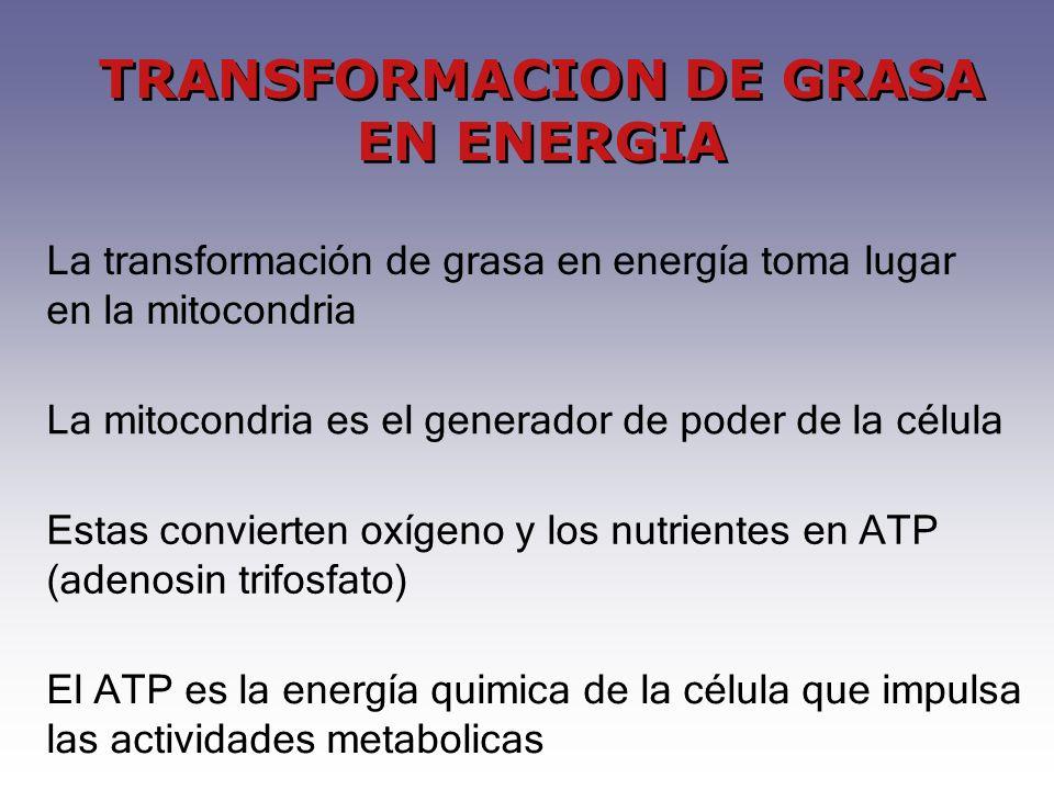 El ATP es la energía quimica de la célula que impulsa las actividades metabolicas TRANSFORMACION DE GRASA EN ENERGIA La transformación de grasa en energía toma lugar en la mitocondria La mitocondria es el generador de poder de la célula Estas convierten oxígeno y los nutrientes en ATP (adenosin trifosfato)