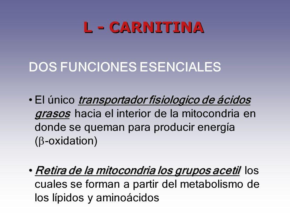 DOS FUNCIONES ESENCIALES transportador fisiologico de ácidos grasosEl único transportador fisiologico de ácidos grasos hacia el interior de la mitocondria en donde se queman para producir energía ( -oxidation) Retira de la mitocondria los grupos acetilRetira de la mitocondria los grupos acetil los cuales se forman a partir del metabolismo de los lípidos y aminoácidos L - CARNITINA