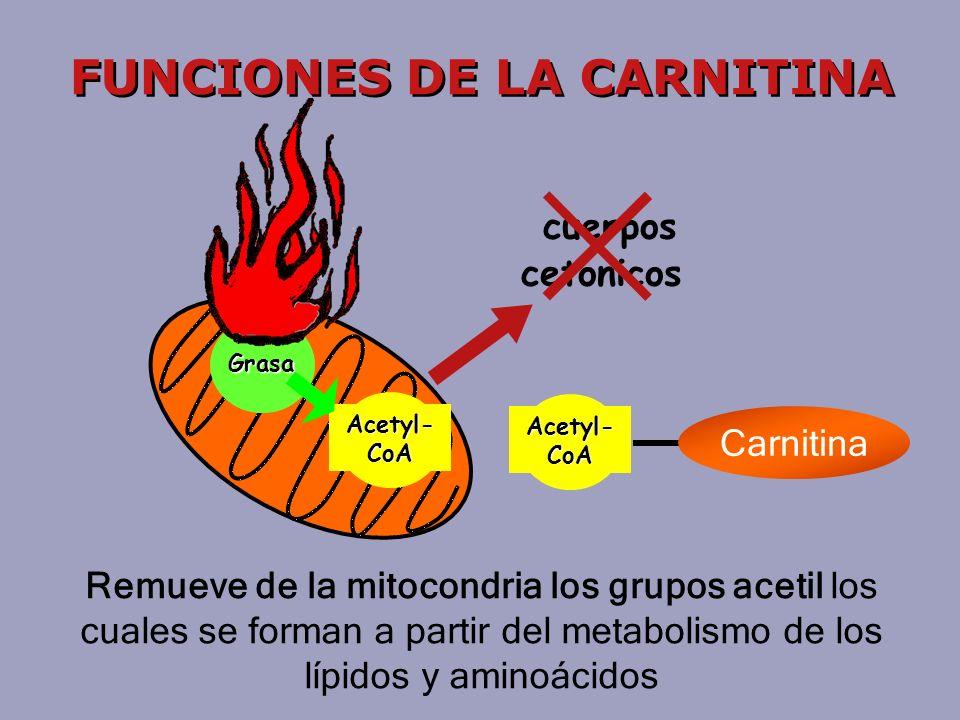 Acetyl- CoA Carnitina Grasa Acetyl- CoA FUNCIONES DE LA CARNITINA Remueve de la mitocondria los grupos acetil los cuales se forman a partir del metabolismo de los lípidos y aminoácidos cuerpos cetonicos