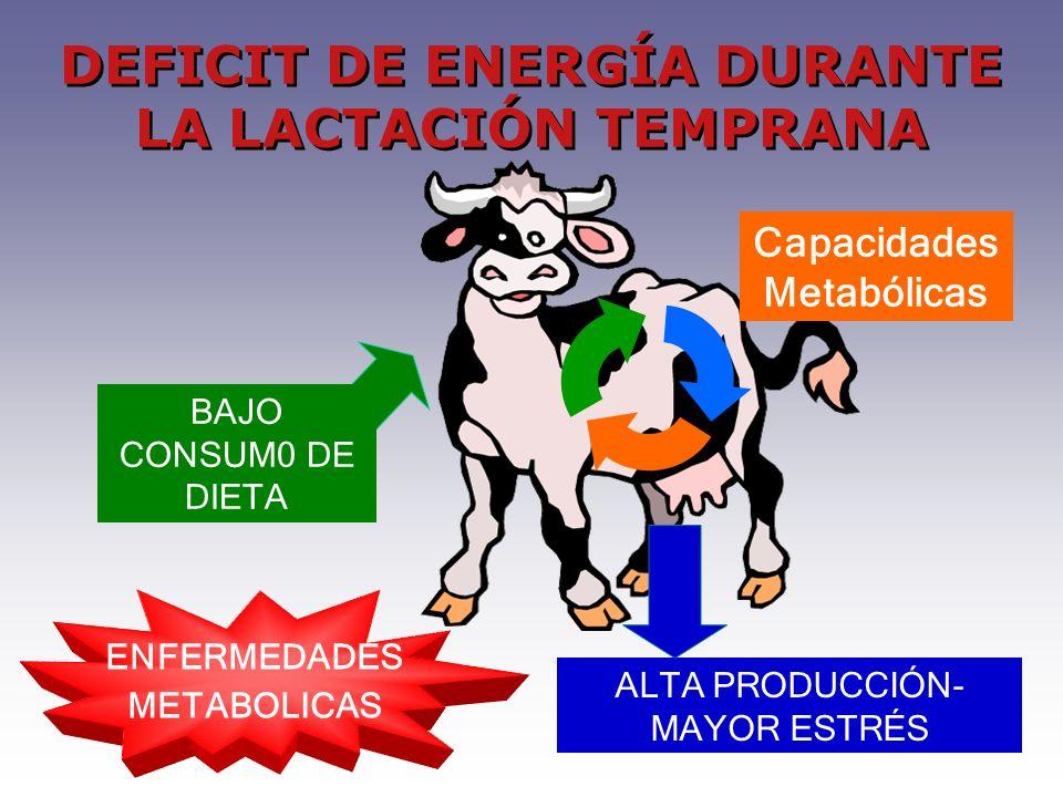 ENFERMEDADES METABOLICAS BAJO CONSUM0 DE DIETA DEFICIT DE ENERGÍA DURANTE LA LACTACIÓN TEMPRANA ALTA PRODUCCIÓN- MAYOR ESTRÉS Capacidades Metabólicas