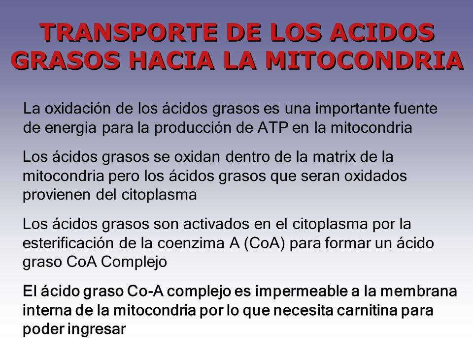 TRANSPORTE DE LOS ACIDOS GRASOS HACIA LA MITOCONDRIA La oxidación de los ácidos grasos es una importante fuente de energia para la producción de ATP en la mitocondria Los ácidos grasos se oxidan dentro de la matrix de la mitocondria pero los ácidos grasos que seran oxidados provienen del citoplasma Los ácidos grasos son activados en el citoplasma por la esterificación de la coenzima A (CoA) para formar un ácido graso CoA Complejo El ácido graso Co-A complejo es impermeable a la membrana interna de la mitocondria por lo que necesita carnitina para poder ingresar