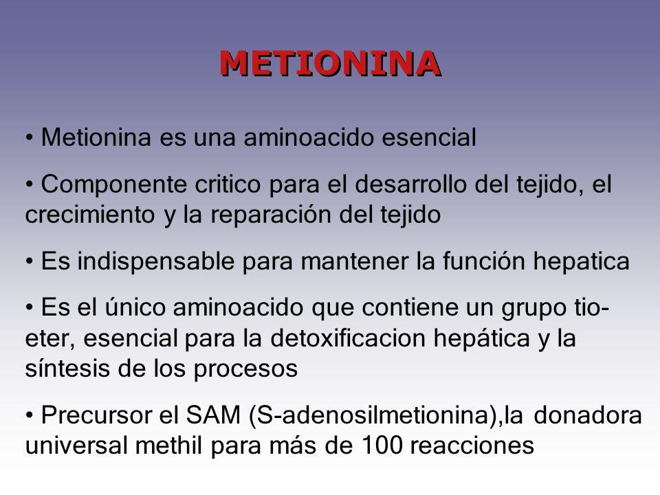 METIONINA Metionina es una aminoacido esencial Componente critico para el desarrollo del tejido, el crecimiento y la reparación del tejido Es indispensable para mantener la función hepatica Es el único aminoacido que contiene un grupo tio- eter, esencial para la detoxificacion hepática y la síntesis de los procesos Precursor el SAM (S-adenosilmetionina),la donadora universal methil para más de 100 reacciones