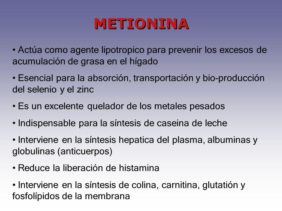 METIONINA Actúa como agente lipotropico para prevenir los excesos de acumulación de grasa en el hígado Esencial para la absorción, transportación y bio-producción del selenio y el zinc Es un excelente quelador de los metales pesados Indispensable para la síntesis de caseina de leche Interviene en la síntesis hepatica del plasma, albuminas y globulinas (anticuerpos) Reduce la liberación de histamina Interviene en la síntesis de colina, carnitina, glutatión y fosfolípidos de la membrana