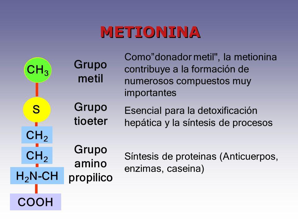 S CH 3 CH 2 H 2 N-CH COOH Grupo metil Grupo tioeter Grupo amino propilico Comodonador metil , la metionina contribuye a la formación de numerosos compuestos muy importantes Esencial para la detoxificación hepática y la síntesis de procesos Síntesis de proteinas (Anticuerpos, enzimas, caseina) CH 3 S CH 2 H 2 N-CH METIONINA
