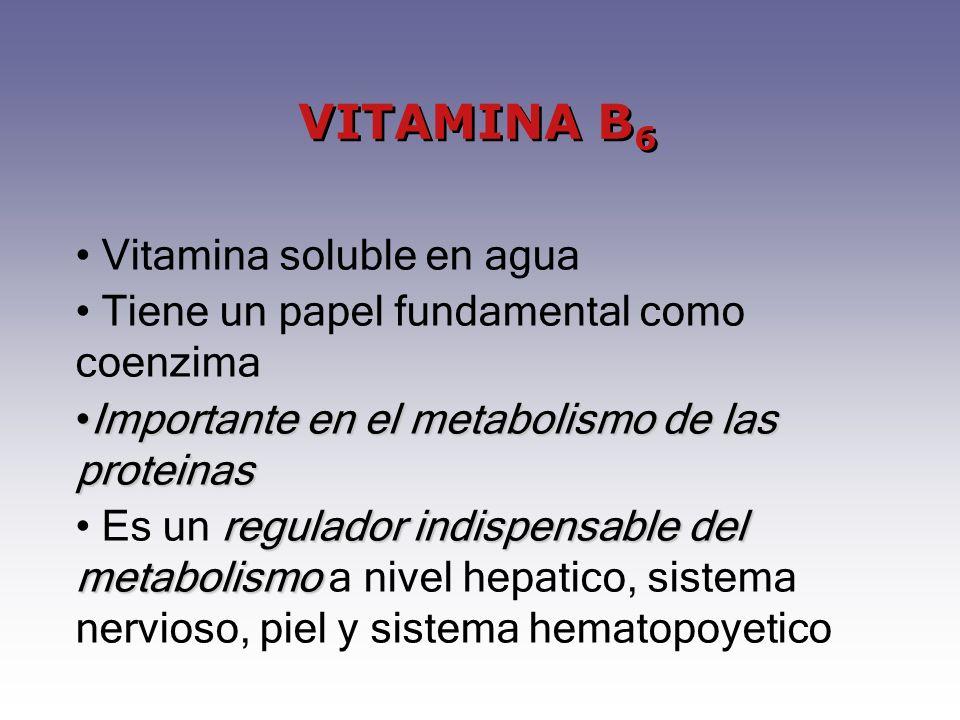 Vitamina soluble en agua Tiene un papel fundamental como coenzima Importante en el metabolismo de las proteinasImportante en el metabolismo de las pro