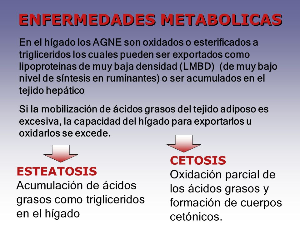 ENFERMEDADES METABOLICAS En el hígado los AGNE son oxidados o esterificados a trigliceridos los cuales pueden ser exportados como lipoproteinas de muy baja densidad (LMBD) (de muy bajo nivel de síntesis en ruminantes) o ser acumulados en el tejido hepático Si la mobilización de ácidos grasos del tejido adiposo es excesiva, la capacidad del hígado para exportarlos u oxidarlos se excede.