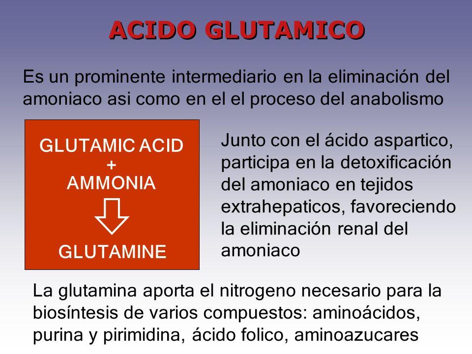 La glutamina aporta el nitrogeno necesario para la biosíntesis de varios compuestos: aminoácidos, purina y pirimidina, ácido folico, aminoazucares ACIDO GLUTAMICO Junto con el ácido aspartico, participa en la detoxificación del amoniaco en tejidos extrahepaticos, favoreciendo la eliminación renal del amoniaco GLUTAMINE GLUTAMIC ACID + AMMONIA Es un prominente intermediario en la eliminación del amoniaco asi como en el el proceso del anabolismo