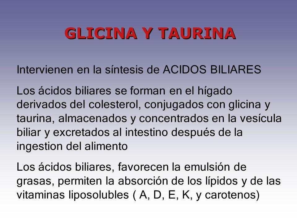 GLICINA Y TAURINA Intervienen en la síntesis de ACIDOS BILIARES Los ácidos biliares se forman en el hígado derivados del colesterol, conjugados con glicina y taurina, almacenados y concentrados en la vesícula biliar y excretados al intestino después de la ingestion del alimento Los ácidos biliares, favorecen la emulsión de grasas, permiten la absorción de los lípidos y de las vitaminas liposolubles ( A, D, E, K, y carotenos)