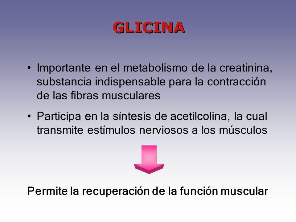 Importante en el metabolismo de la creatinina, substancia indispensable para la contracción de las fibras musculares Participa en la síntesis de aceti