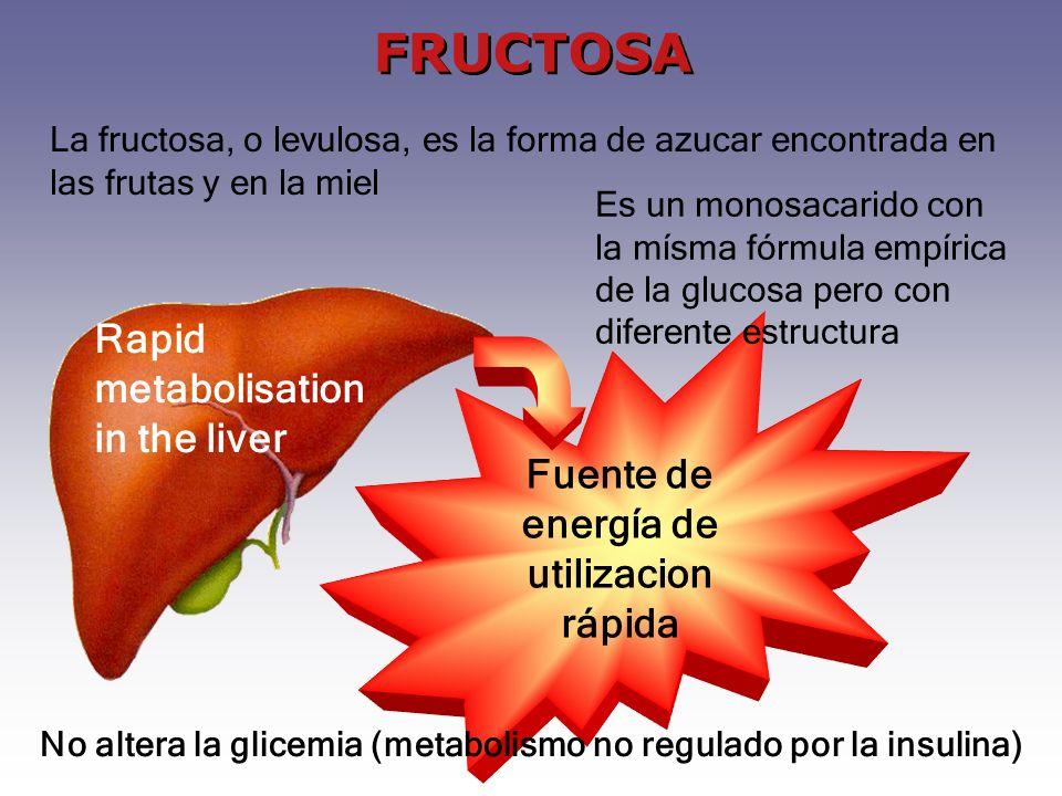 Fuente de energía de utilizacion rápida No altera la glicemia (metabolismo no regulado por la insulina) Rapid metabolisation in the liver FRUCTOSA La fructosa, o levulosa, es la forma de azucar encontrada en las frutas y en la miel Es un monosacarido con la mísma fórmula empírica de la glucosa pero con diferente estructura