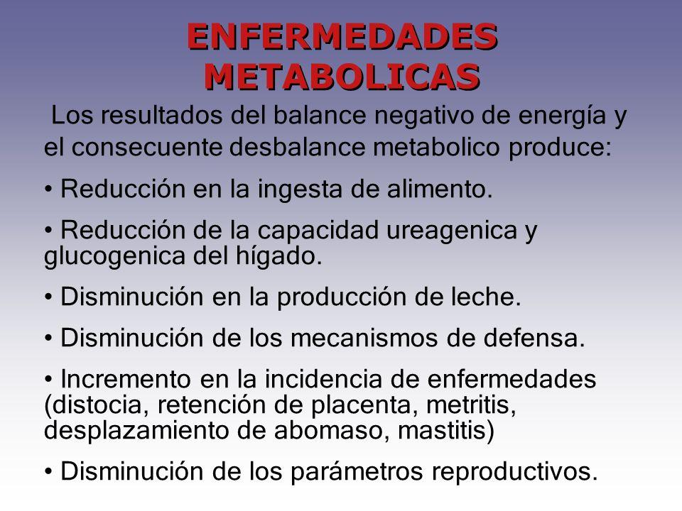 ENFERMEDADES METABOLICAS Los resultados del balance negativo de energía y el consecuente desbalance metabolico produce: Reducción en la ingesta de ali