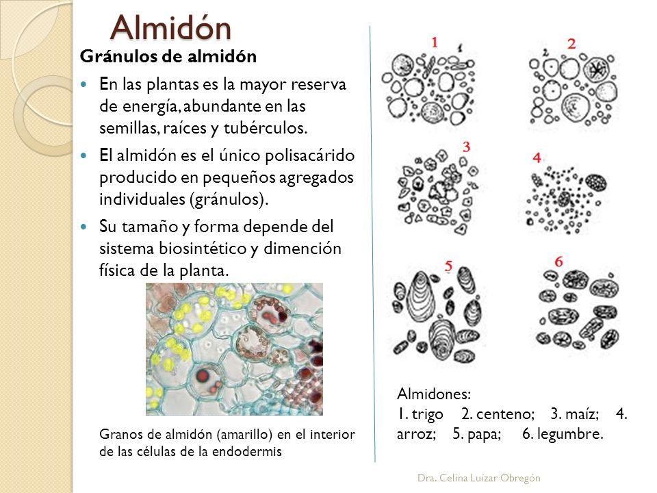 Almidón Gránulos de almidón En las plantas es la mayor reserva de energía, abundante en las semillas, raíces y tubérculos. El almidón es el único poli