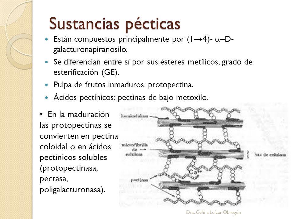 Sustancias pécticas Están compuestos principalmente por (1 4 )- –D- galacturonapiranosilo. Se diferencian entre sí por sus ésteres metílicos, grado de