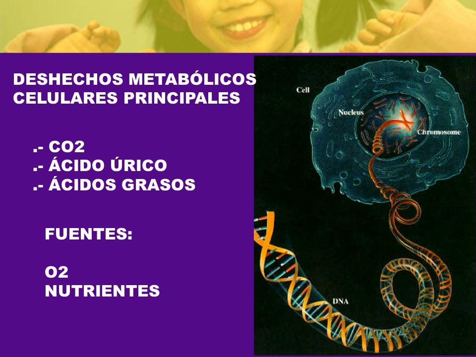 DESHECHOS METABÓLICOS CELULARES PRINCIPALES.- CO2.- ÁCIDO ÚRICO.- ÁCIDOS GRASOS FUENTES: O2 NUTRIENTES