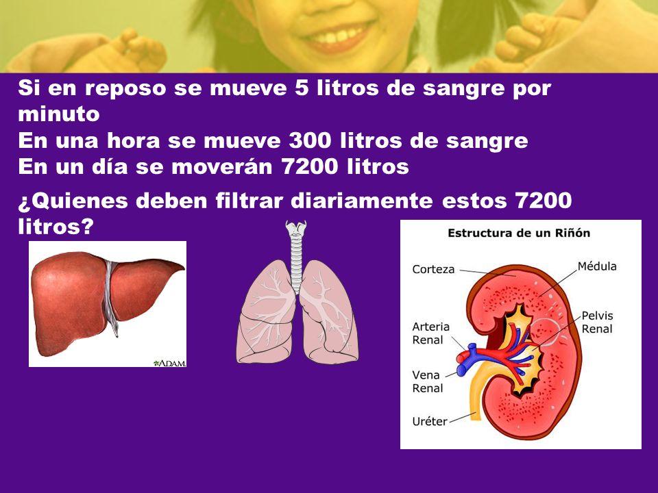 Si en reposo se mueve 5 litros de sangre por minuto En una hora se mueve 300 litros de sangre En un día se moverán 7200 litros ¿Quienes deben filtrar