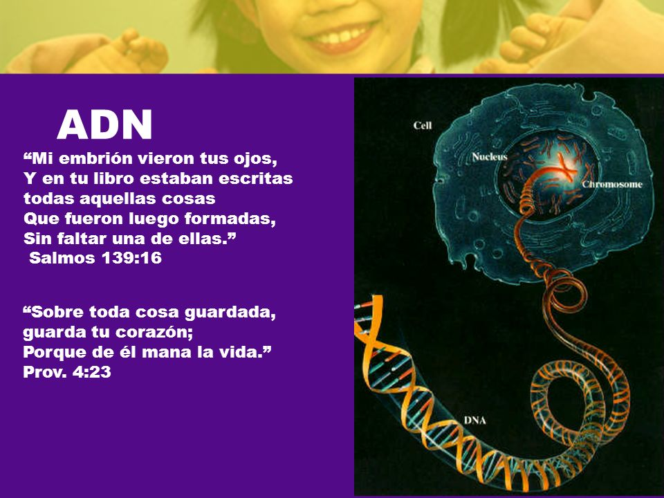 ADN Mi embrión vieron tus ojos, Y en tu libro estaban escritas todas aquellas cosas Que fueron luego formadas, Sin faltar una de ellas. Salmos 139:16