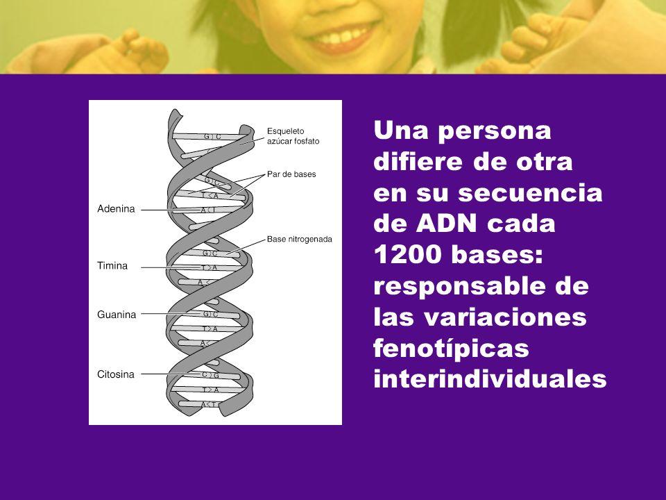 Una persona difiere de otra en su secuencia de ADN cada 1200 bases: responsable de las variaciones fenotípicas interindividuales