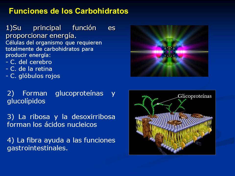Existen dos tipos de fibras: Fibra soluble en Agua: Tiene la capacidad de captar colesterol en el intestino, pero también interfiere en la absorción de otros nutrientes.