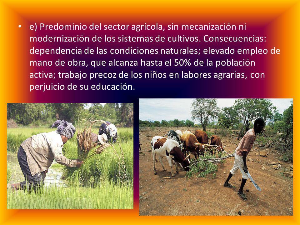 e) Predominio del sector agrícola, sin mecanización ni modernización de los sistemas de cultivos. Consecuencias: dependencia de las condiciones natura