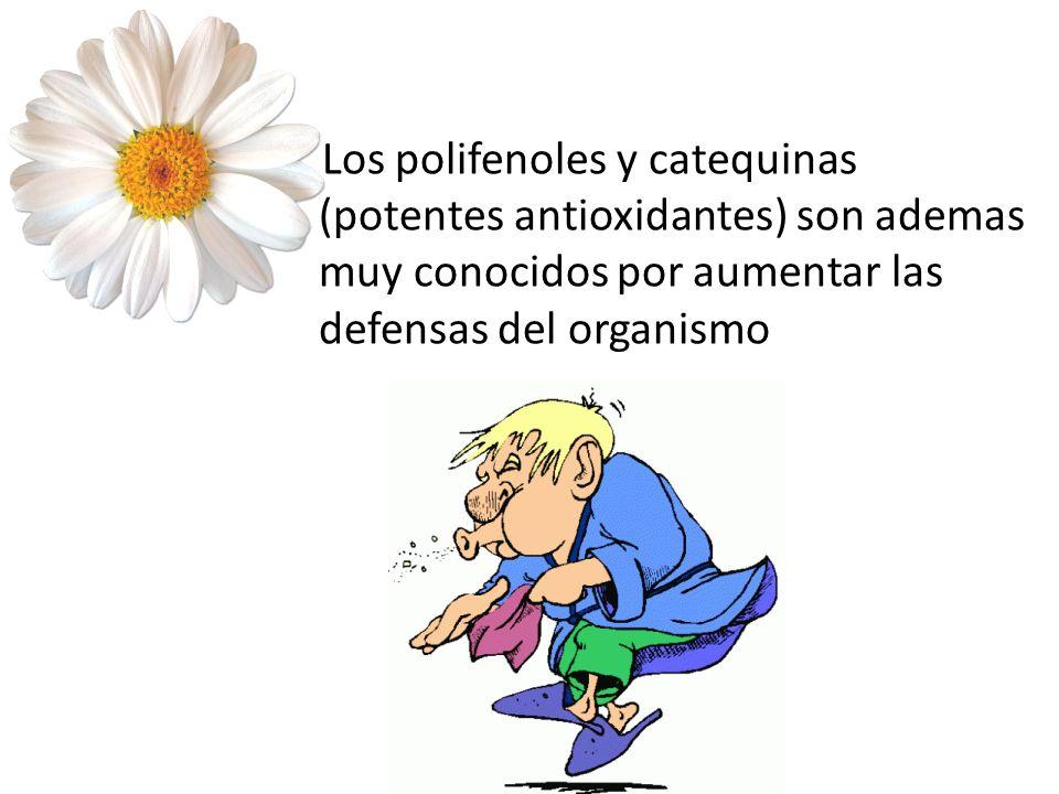 Los polifenoles y catequinas (potentes antioxidantes) son ademas muy conocidos por aumentar las defensas del organismo