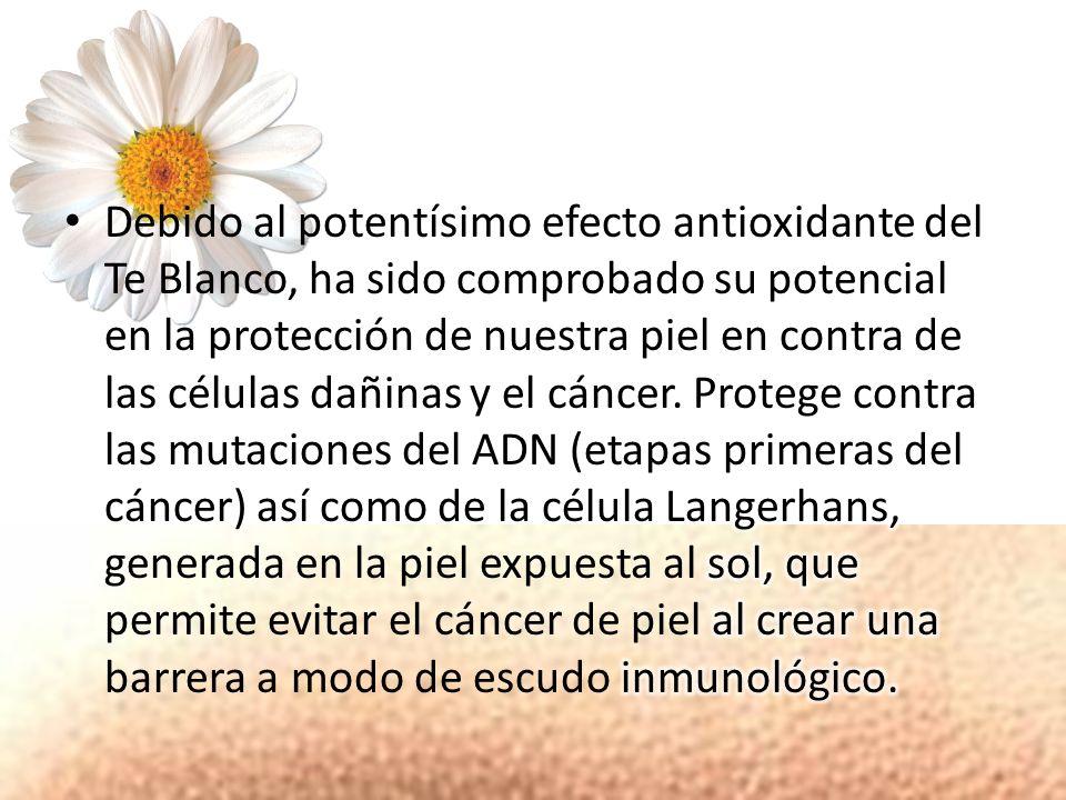 MANZANILLA (Matricaria chamomilla L.) contiene antioxidantes como el acido cafeico y flavonoides como Apigenina y Quercetina, la Manzanilla ha sido reconocida y utilizada en dermatología desde tiempos inmemoriales debido a sus efectos antiinflamatorios, humectantes y emolientes que protegen a la piel de factores agresores como los rayos UV, el ozono y otros.