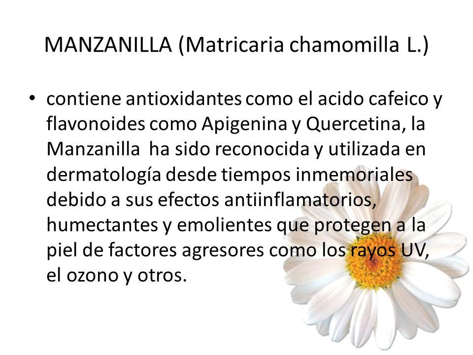 MANZANILLA (Matricaria chamomilla L.) contiene antioxidantes como el acido cafeico y flavonoides como Apigenina y Quercetina, la Manzanilla ha sido re