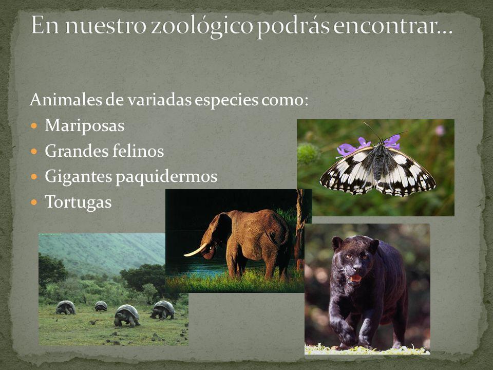 Animales de variadas especies como: Mariposas Grandes felinos Gigantes paquidermos Tortugas
