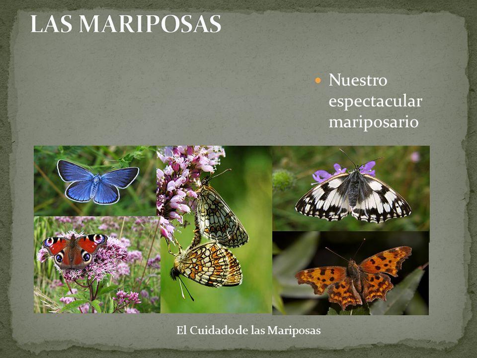 Se debe permitir la convivencia entre insectos y plantas, evitando elementos nocivos para sus vidas como los insecticidas.
