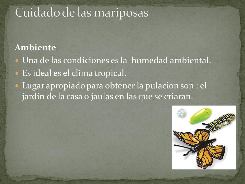 Ambiente Una de las condiciones es la humedad ambiental. Es ideal es el clima tropical. Lugar apropiado para obtener la pulacion son : el jardín de la