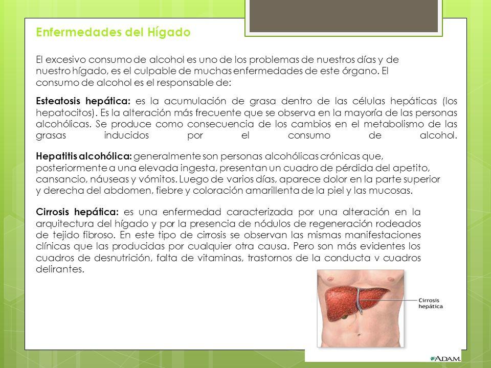 Enfermedades del Hígado El excesivo consumo de alcohol es uno de los problemas de nuestros días y de nuestro hígado, es el culpable de muchas enfermedades de este órgano.