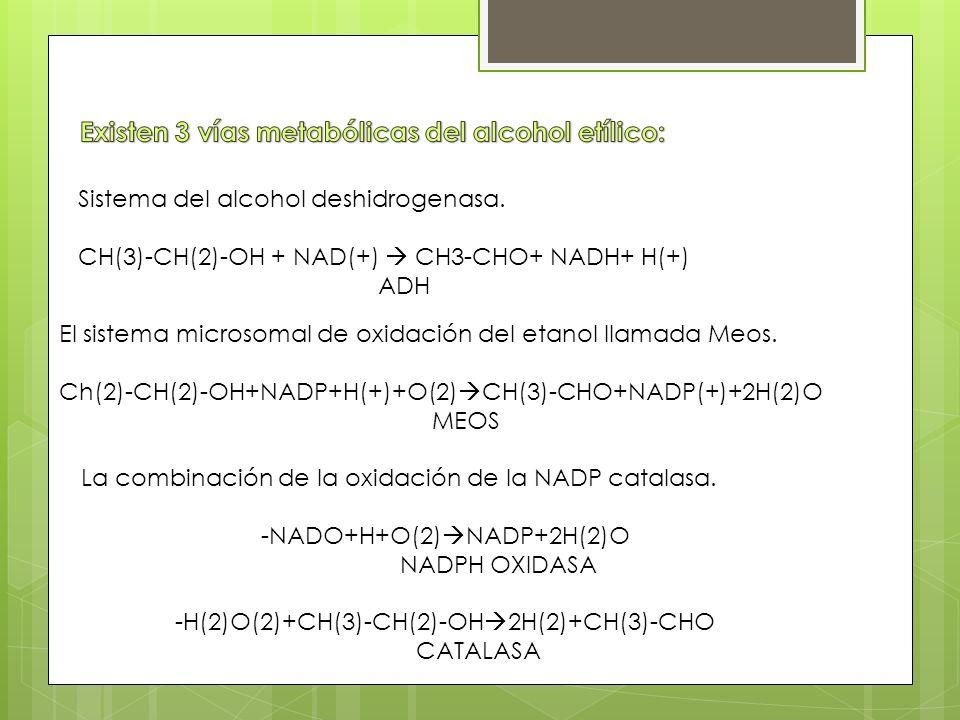 Sistema del alcohol deshidrogenasa.