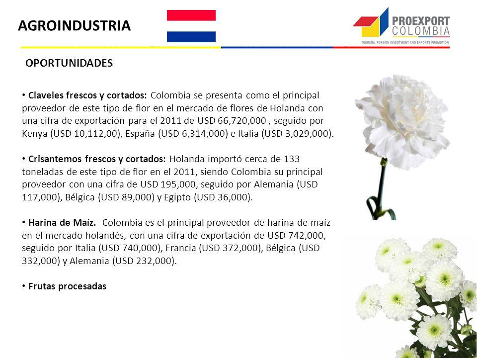 OPORTUNIDADES Claveles frescos y cortados: Colombia se presenta como el principal proveedor de este tipo de flor en el mercado de flores de Holanda co