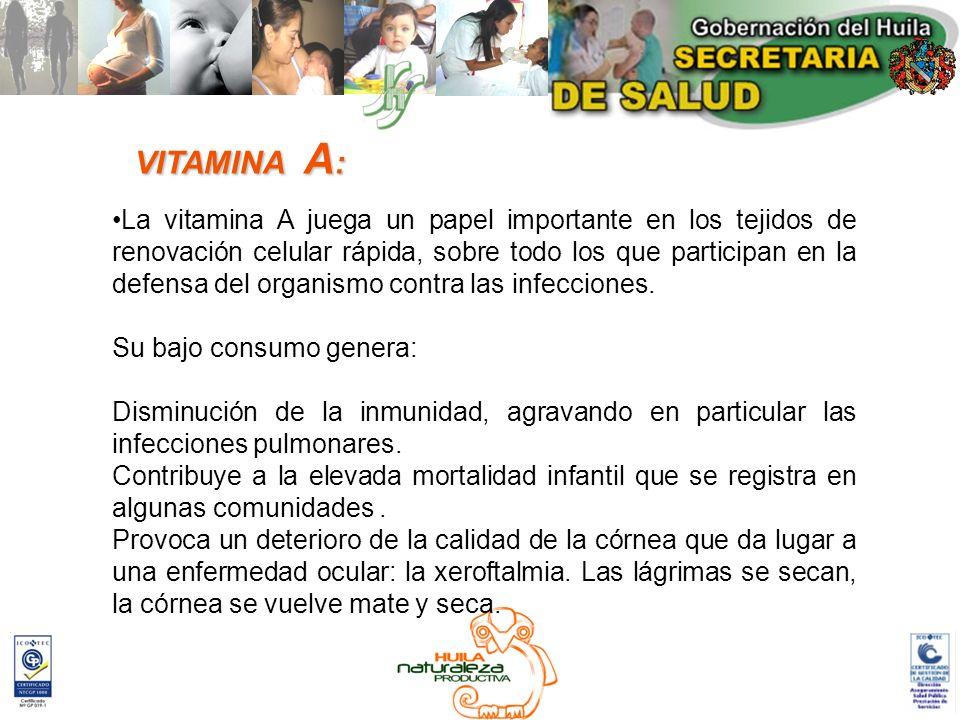 La vitamina A juega un papel importante en los tejidos de renovación celular rápida, sobre todo los que participan en la defensa del organismo contra