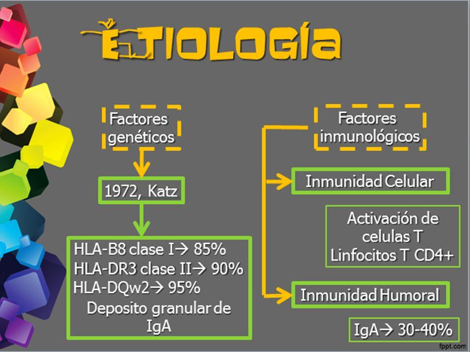 tiología tiología e Factoresgenéticos Factoresinmunológicos Inmunidad Celular Inmunidad Humoral 1972, Katz HLA-B8 clase I 85% HLA-DR3 clase II 90% HLA