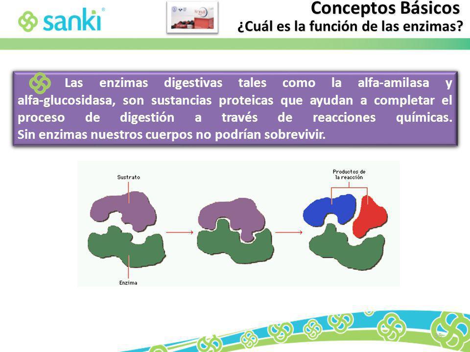 35 Las enzimas digestivas tales como la alfa-amilasa y alfa-glucosidasa, son sustancias proteicas que ayudan a completar el proceso de digestión a tra