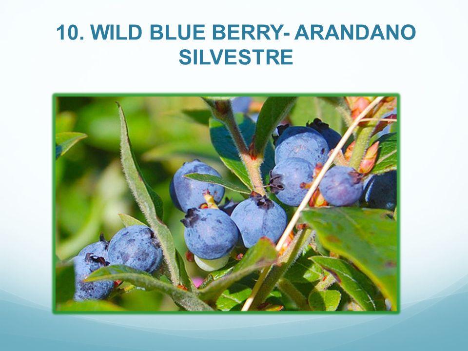 10. WILD BLUE BERRY- ARANDANO SILVESTRE