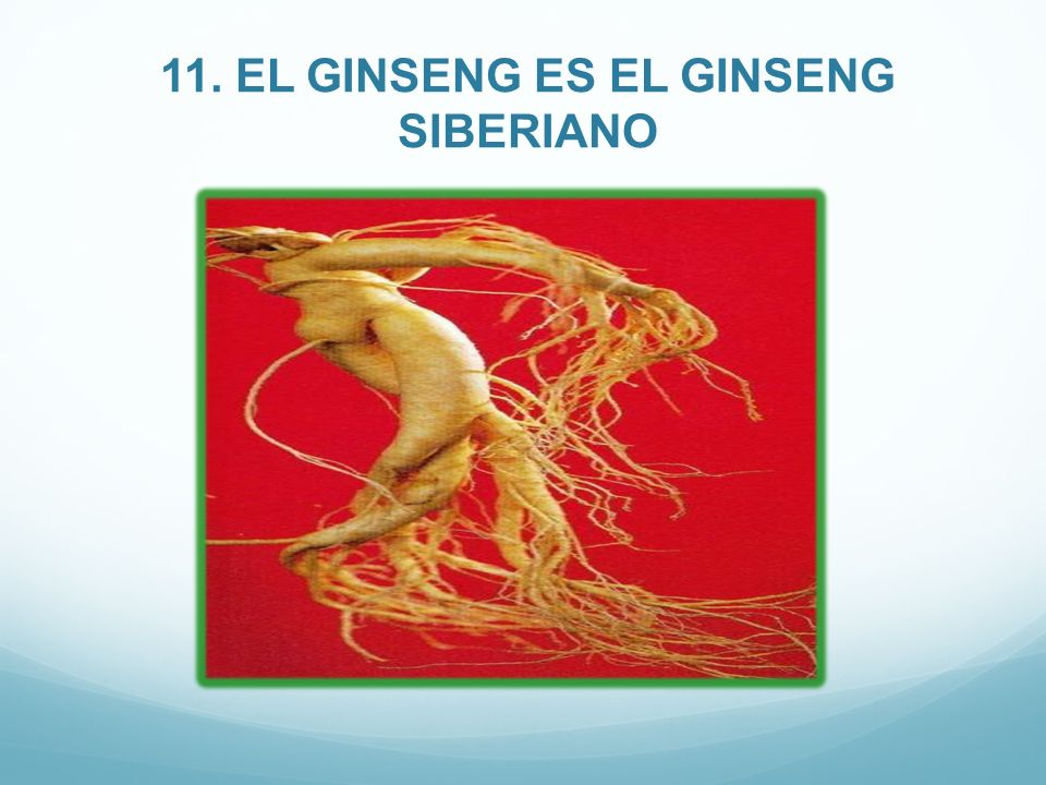 11. EL GINSENG ES EL GINSENG SIBERIANO