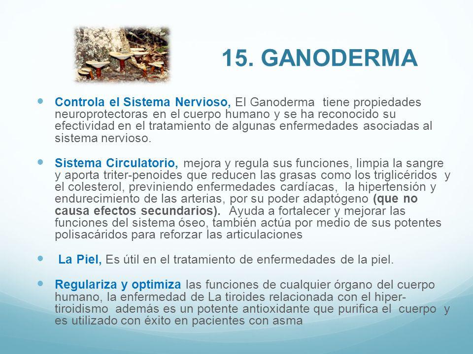 Controla el Sistema Nervioso, El Ganoderma tiene propiedades neuroprotectoras en el cuerpo humano y se ha reconocido su efectividad en el tratamiento