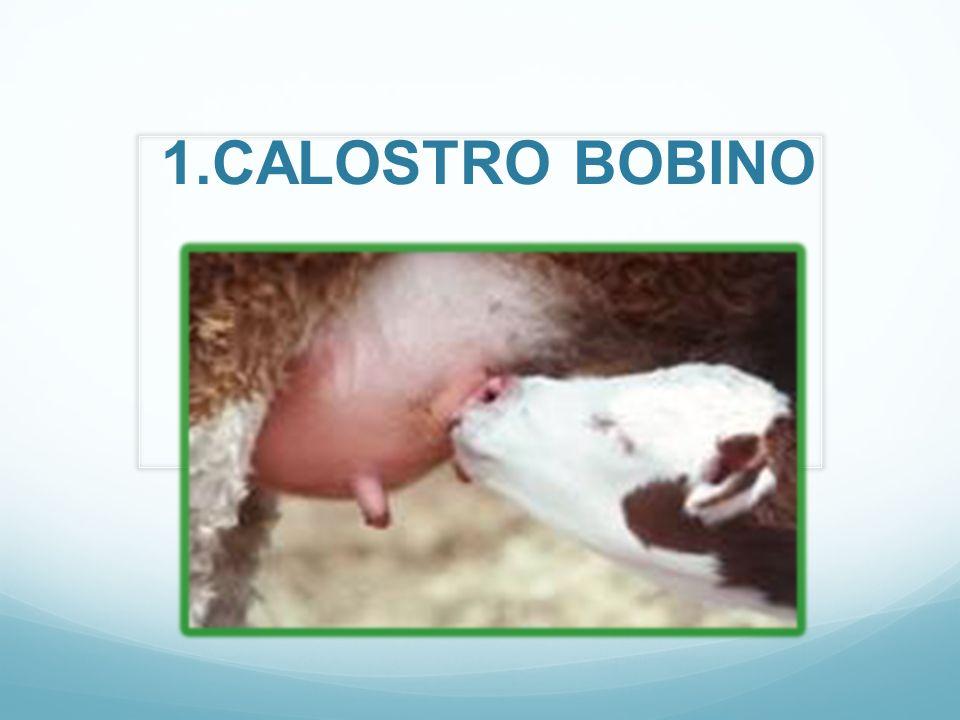 1.CALOSTRO BOBINO